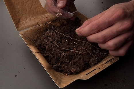 Save a Planet : planter sa gamelle pour faire pousser des fleurs | Efficycle | Scoop.it