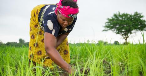 Deuda y desesperación: Pequeños Agricultores de Tanzania sometidos a una nueva Ola de Colonialismo | La R-Evolución de ARMAK | Scoop.it