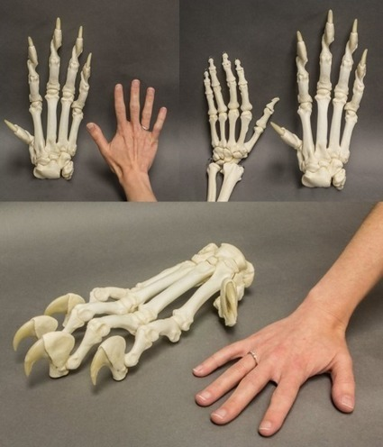 Tiger Bones | Art References | Scoop.it