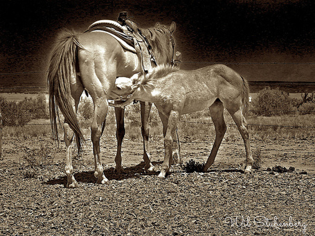 Wil Stubenberg Photography | Western Lifestyle | Scoop.it
