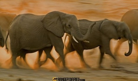 Top 25 Photographs from the Wilderness #9 - National Geographic | Kruger & African Wildlife | Scoop.it