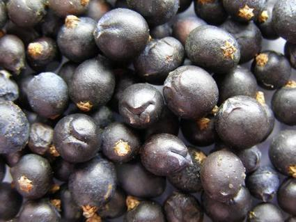 Protecting juniper from a berry uncertain future | Sustain Our Earth | Scoop.it