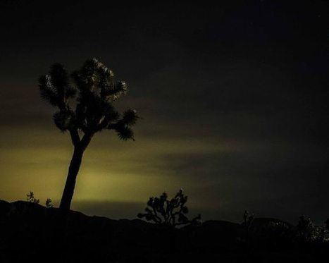 Visiting Joshua Tree... again | Traveling and taking pictures | Scoop.it