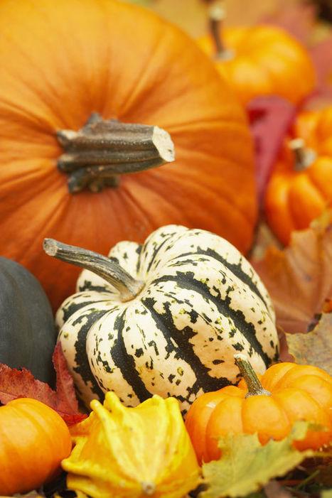 MU | IPM | MEG | Pumpkin: A Brief History | School Gardening Resources | Scoop.it