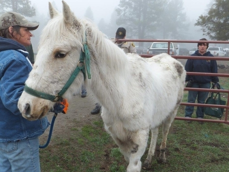 43 animals seized from Klamath Co. farm - KOIN Local 6 | Second Chance with Saving Grace (SCwSG), Inc. | Scoop.it