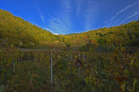 Weine aus Trauben und frischer Luft, sonst nichts: Naturweine « Mythopia Blog | Weinrallye | Scoop.it