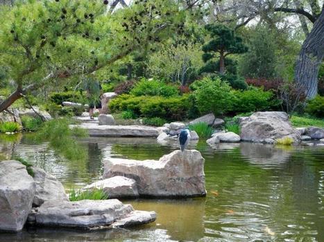 Twitter / desertcronenm: @brucepknight Japanese Garden ... | Japanese Gardens | Scoop.it