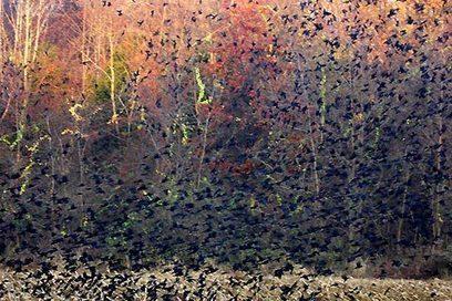 Carolyn Marks Blackwood's photos of flocks of birds   Visual*~*Revolution   Scoop.it