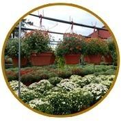 Geerlings Garden Center | Annie Haven | Haven Brand | Scoop.it