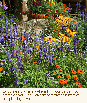 Planning your Butterfly Garden : Gardens With Wings | Gardening is more than Digging the Dirt | Scoop.it