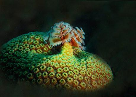 The Underwater World of Corals | Cruzine | Artwork for The Brain | Scoop.it