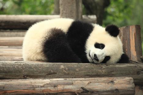 熊精神: 懶到底來求生存 | 孵個小故事 | Scoop.it
