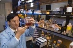 Des chercheurs parviennent à transformer la cellulose en amidon ! | Culture | Scoop.it