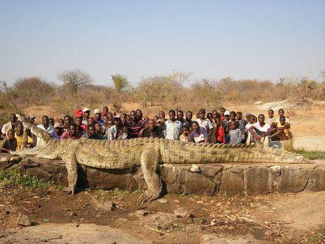 je mesure 6 mètres 70, je pèse 1130 kilos, j'ai dévoré des hommes, je vis dans un fleuve du Niger, je suis... | Epic pics | Scoop.it