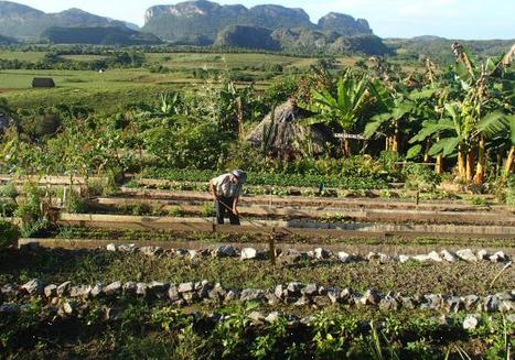Cuba, le pays où l'agroécologie est vraiment appliquée - reporterre.net | Les colocs du jardin | Scoop.it