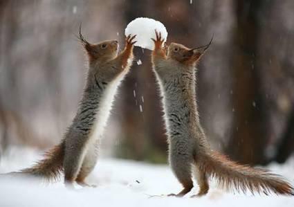 Russian Photographer Captures Unbelievable Photographs of Squirrels » StoryDecker | Online News | Scoop.it