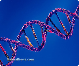 Conventional medicine openly admits to confusion over BRCA1 gene | Maximized Living System for Life-Long Wellness Changes | Scoop.it