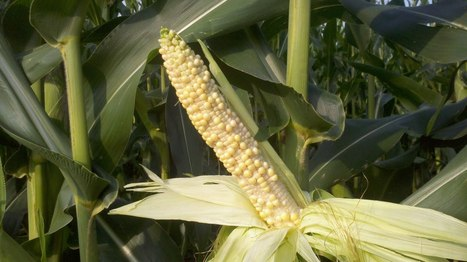 HyMark High Spots: WalMart And Nitrogen | New agricultural trends | Scoop.it