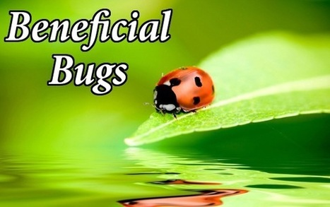 5 Beneficial Bugs that Could Help Your Organic Garden Grow | Botany | Scoop.it