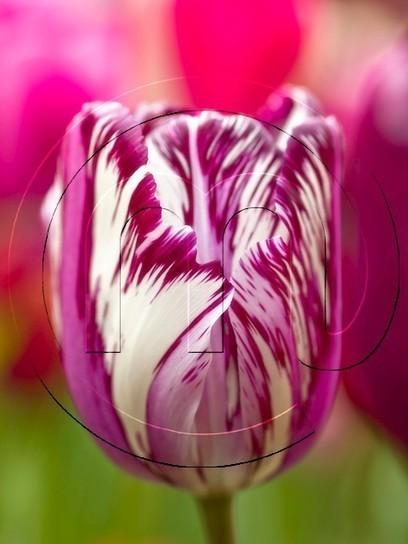 Make Planting Summer Bulbs an Interesting Gardening Activity | Flower Bulbs | Scoop.it
