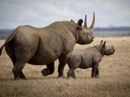 Recent Study: Why SA needs rhino tourism | What's Happening to Africa's Rhino? | Scoop.it