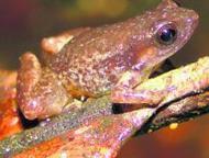 Un tercio de los anfibios del país está en riesgo - El Comercio | AGRICULTURA ORGANICA | Scoop.it