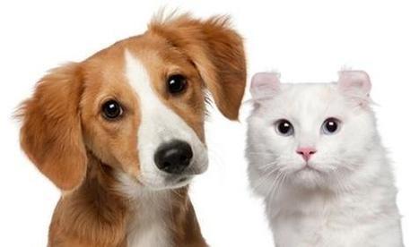 Chien et chat : l'un vous adore, mais l'autre... ? (vidéo) [www.passionsante.be] | CaniCatNews-actualité | Scoop.it