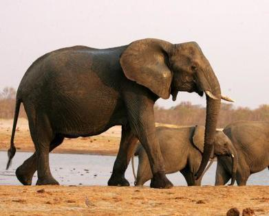 Hunter shoots biggest elephant killed in Africa for 30 years | Nature Animals humankind | Scoop.it