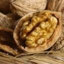 Point de campagne positif pour la noix de Grenoble | Le fruit de l'actualité | Scoop.it