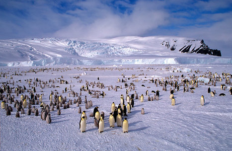 Russia Is Vital to Protecting Antarctica's Ross Sea | Antarctica | Scoop.it