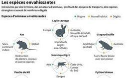 Les espèces invasives, un fléau pour la biodiversité mondiale — 20minutes.fr | biological diversity | Scoop.it