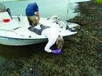 Costas de Luisiana siguen sin ranas e insectos a tres años del derrame de petróleo | Bichos en Clase | Scoop.it