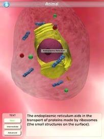 Entra en la célula | Temas de biologia celular para secundario | Scoop.it