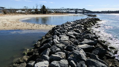 "Forget seawalls: There's a cheaper, more effective way to protect shorelines (""use living shorelines"") 