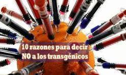 10 RAZONES PARA DECIR NO A LOS TRANSGÉNICOS | Nuevos modelos alimentarios y agropecuarios | Scoop.it