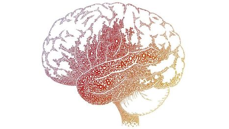 Understanding Dyslexia and the Reading Brain in Kids | AdLit | Scoop.it