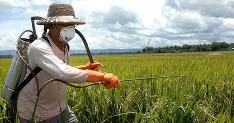 Syngenta refuse de se vendre à Monsanto | Mes News A La Une | Scoop.it