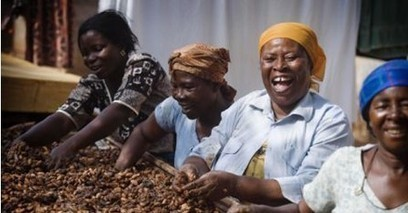 PBC cocoa certification programme benefits 60 thousand farmers - Myjoyonline.com | Fairly Traded News | Scoop.it