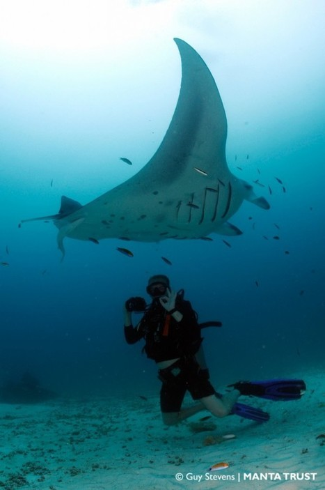 Volunteer | Manta Trust | All about water, the oceans, environmental issues | Scoop.it