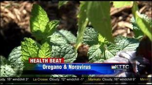 Fight norovirus with oregano | KTTC (TV- Quincy, IL) | CALS in the News | Scoop.it