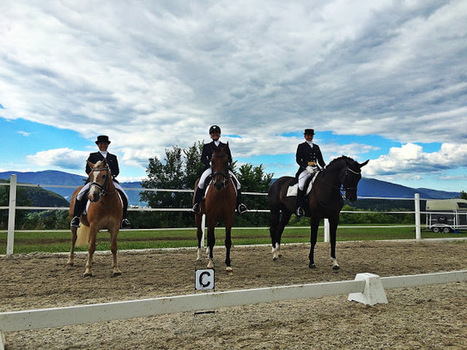 Show Report 2016 - Part 5: Forgetting Is Difficult... | Dressage Hafl | Scoop.it