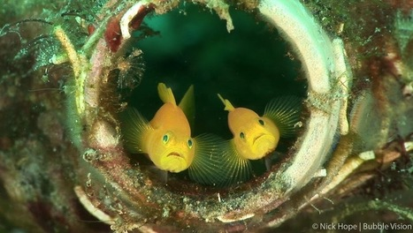 Bubble Vision - Vidéos - Google+ | Marine life | Scoop.it