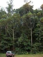 Non, les plans d'aménagement forestiers n'aggravent pas la déforestation - CIRAD   Ecosystèmes Tropicaux   Scoop.it