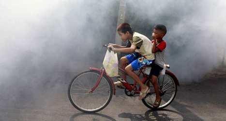 Vaccin anti dengue : Sanofi se donne tous les moyens | Santé publique | Scoop.it