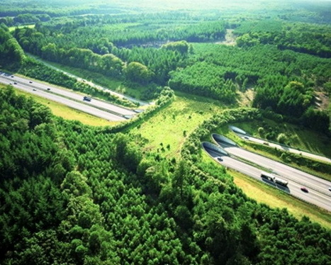 Bridges For Animals - Wildlife Overpasses | Development geography | Scoop.it