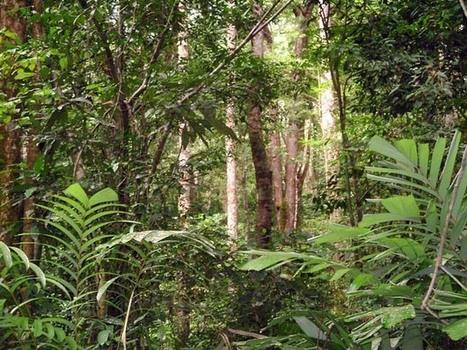 La forêt classée de la Mondah serait en danger | arts premiers | Scoop.it
