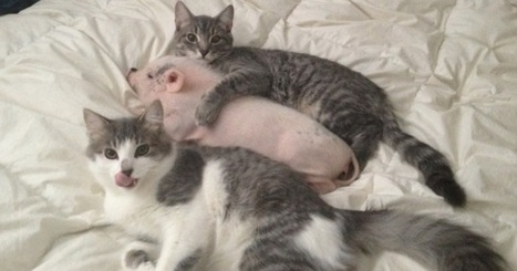 34 Amazing Photos That Prove Cats Are The Best Friends Anyone Can Ever Have | Things that I like | Scoop.it