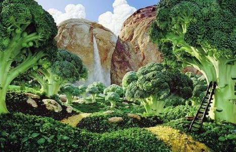 Vers la forêt comestible   Chuchoteuse d'Alternatives   Scoop.it