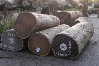 Bois illégal: pourquoi le règlement européen reste feuille morte | News - Filière bois | Scoop.it