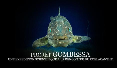 Expédition Coelacanthe : GOMBESSA | Science en tête | Scoop.it